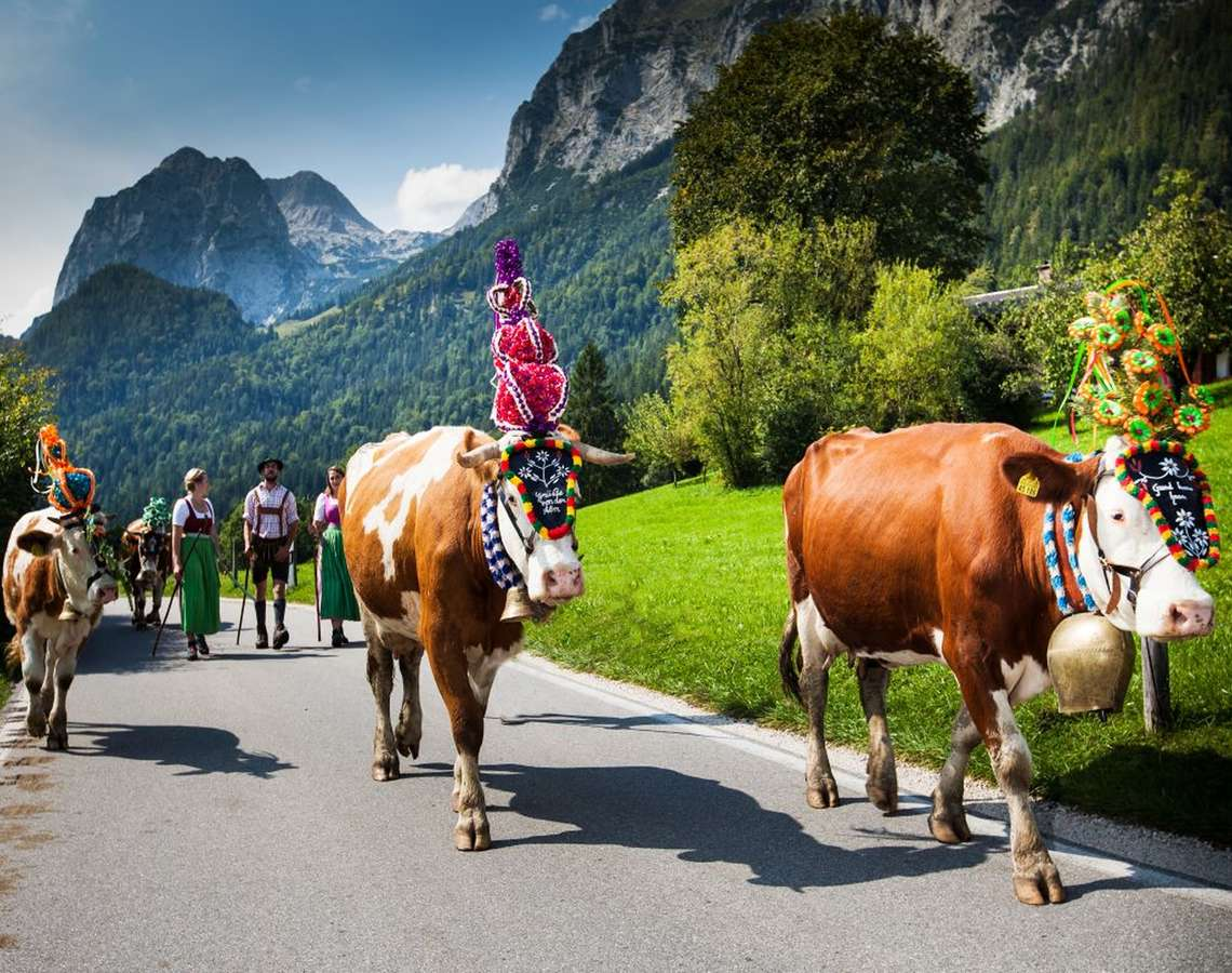 Almabtrieb In Berchtesgaden